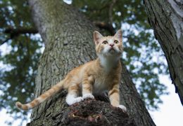 4 motivos para desistir de deixar o seu gato sair sozinho