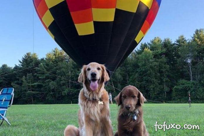 Cachorro com câncer terminal anda de balão e ganha cheeseburger