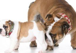 Por que os cães se cheiram tanto?