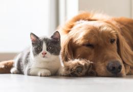Confira os principais sintomas do Alzheimer em cães e gatos
