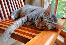 Como saber se o gato está com vermes?