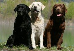 Cor do pelo do cão pode revelar quantos anos ele vai viver