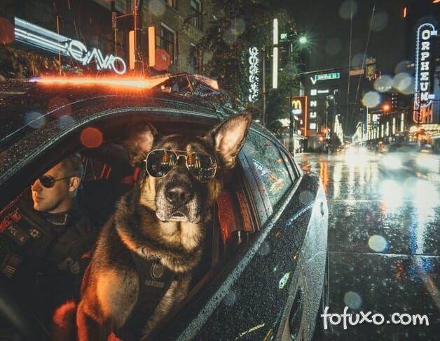 Polícia canadense faz calendário com fotos de seus cães