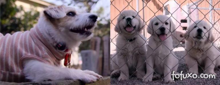 """Netflix divulga trailer da série documental """"Dogs"""""""