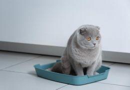 Dicas para remover cheiro de xixi de gato