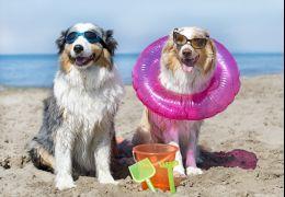 Dicas essenciais para cuidar dos cachorros no verão