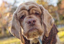 Cachorro pode custar até dois carros populares durante sua vida