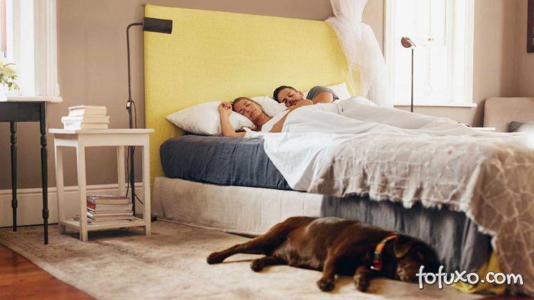 Cachorro que dorme no mesmo quarto do dono é menos destruidor