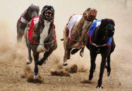 Flórida vota por proibir corrida de galgos