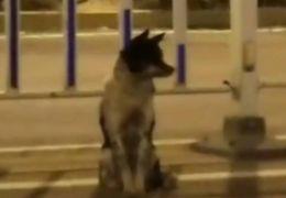 Cachorro espera há mais de 80 dias dona que morreu