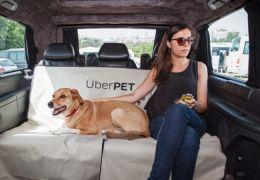 Dicas para levar cachorros no Uber
