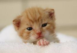 Banho em gatos: A partir de quantos meses isso é possível?