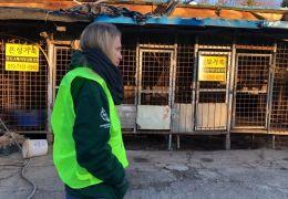 Coreia do Sul fecha maior matadouro de cães do país