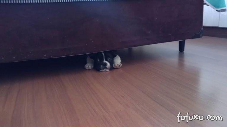 Por que os cães gostam de se esconde debaixo das camas?