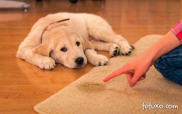 Saiba como tratar cistite em cachorros