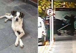 Polícia acusa segurança por agressão e morte no caso do cachorro do Carrefour