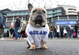 Reino Unido vai proibir venda de cães e gatos em pet shops