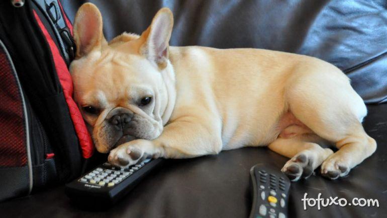 Alemanha lança canal de televisão para cachorros