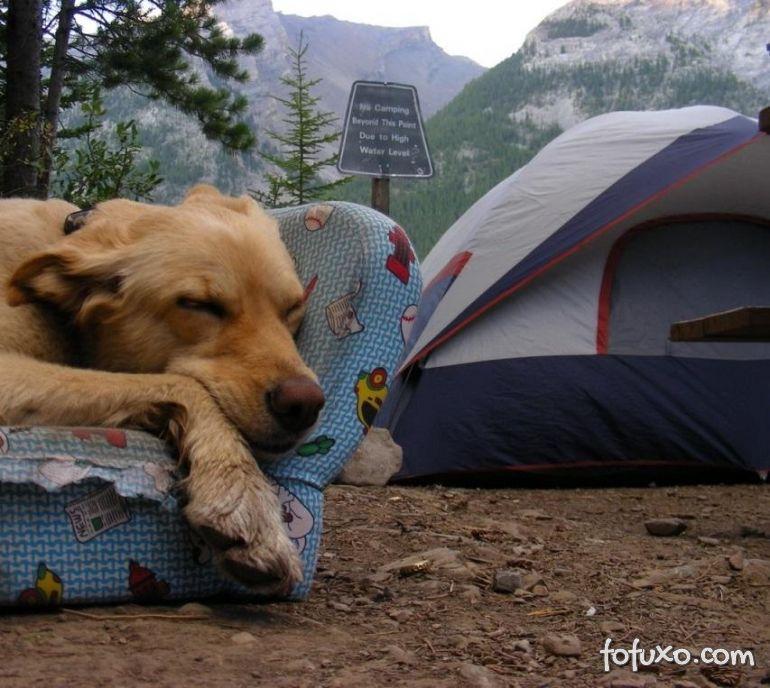 Dicas para acampar com seu cachorro