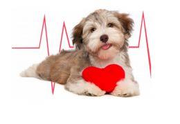 Confira sintomas e causas da dirofilariose em cães