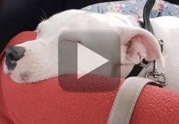 Vídeo de cachorro sendo abandonado comove a internet