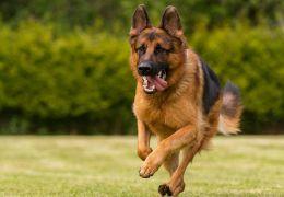 Pesquisa afirma que personalidade de cães variam de acordo com a raça