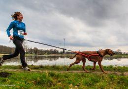 Conheça o Canicross: Corrida com cachorros