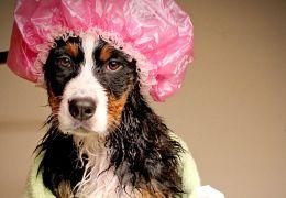 Cuidados em excesso também podem prejudicar cachorros