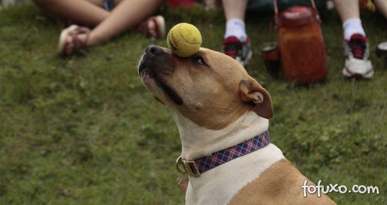 Campo Grande terá primeiro parque público somente para cães