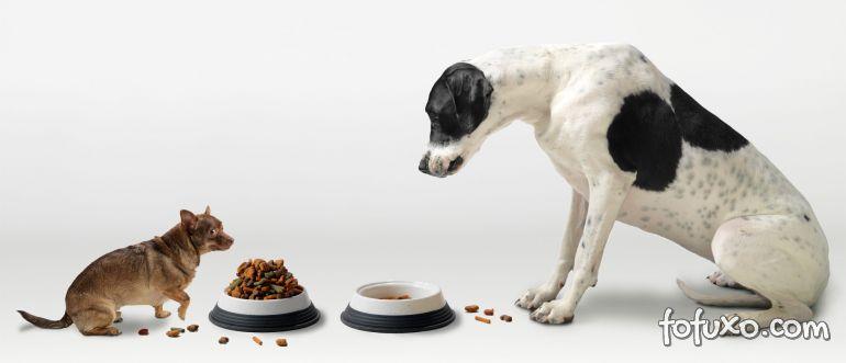 Empresa vai produzir alimentação personalizada para cães e gatos