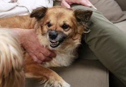 5 coisas que os humanos fazem e que os cachorros não gostam