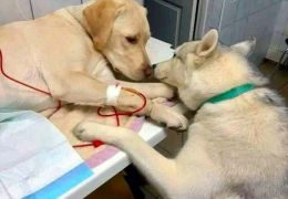 Foto mostra cachorro dando apoio a paciente em clínica veterinária