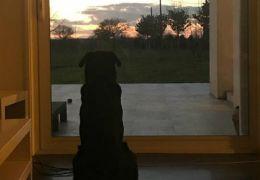 Irmã de jogador de futebol desaparecido posta foto de cachorro esperando