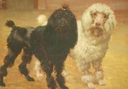 Nova York ganha museu do cachorro