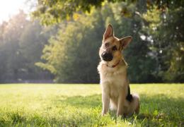 Saiba o que não fazer ao interagir com um cachorro pela primeira vez