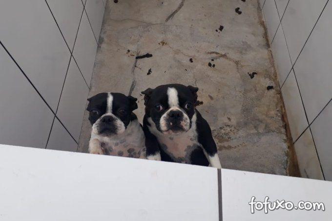 Canil é fechado depois de ser flagrado com 1,5 mil animais vítimas de maus-trato