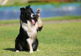 Cachorro que representaria Brasil em competição morre atropelado na praia