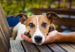 Cadela no cio: Confira alguns cuidados