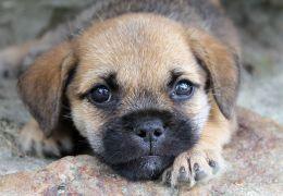 Pesquisa revela as 10 raças de cachorros mais amadas dos brasileiros