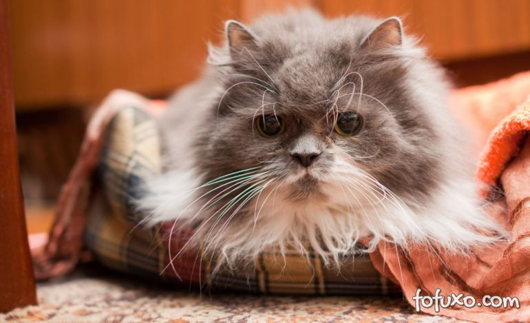 5 dicas para cuidar do seu gato idoso
