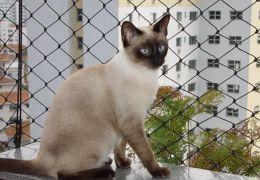 Bichanos: Dicas para adaptar a casa para a chegada do novo gato