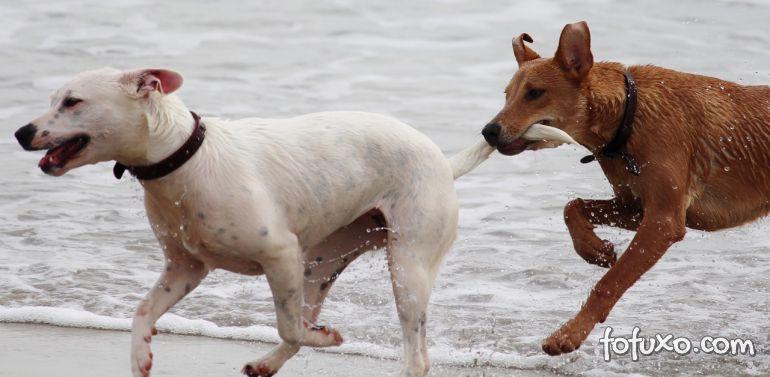 Confira algumas curiosidades sobre os rabos dos cachorros