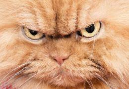 3 coisas que os donos fazem e os gatos odeiam