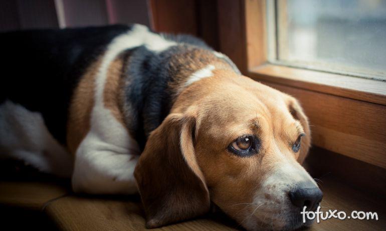 4 dicas para deixar o seu cão feliz e seguro enquanto estiver sozinho