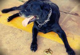 Cachorro que ajudou nas buscas em Brumadinho ganha homenagem
