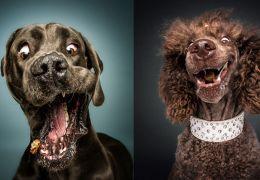 Fotógrafo registra fotos engraçadas de cães tentando pegar comida