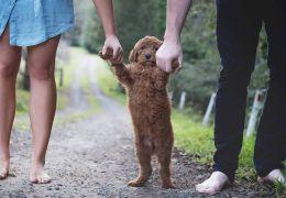Justiça decide dar tutela definitiva para cachorro depois de término de união es