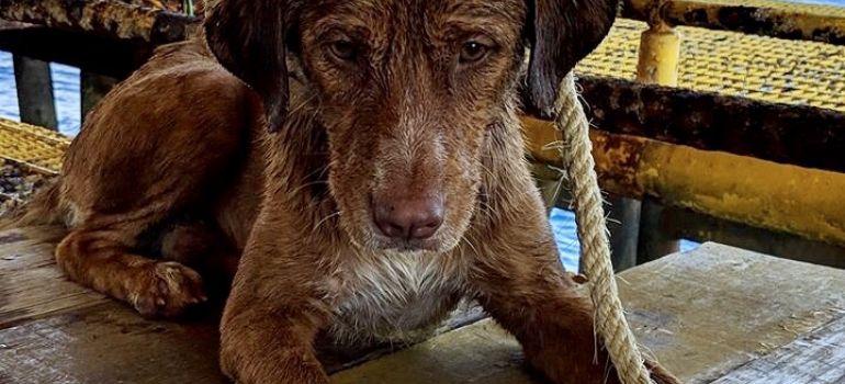 Cachorro é resgatado em alto-mar por trabalhadores de plataforma