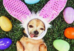 Saiba como fazer um ovo de páscoa para seu cachorro