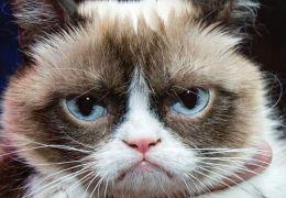 Pesquisa afirma: gatos ignoram humanos de propósito